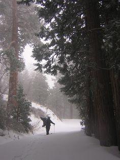 San Bernardino Mountains Snowshoeing