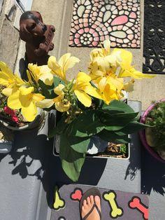 Canna flowers