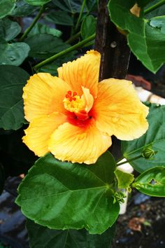 Blondie's Treehouse Inc, green plants, greenhouse