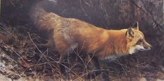 Robert Bateman - On the Move - Red Fox - Search Gallery One for Bateman, Robert limited edition prints, giclee canvases and original paintings by internationally-known artists Wildlife Paintings, Wildlife Art, Fox Art, Bird Art, Watercolor Landscape, Landscape Art, Minnesota, Fantastic Fox, Canadian Wildlife