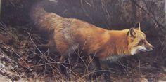 Robert bateman On The Move Red Fox