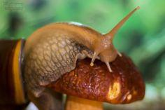Snail / Mushroom