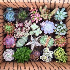 Are you thinking about creating your own assortment of succulent pots that are zanier than anything ever posted to Pinterest? Maybe you want to build