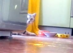 Kitten Demands Privacy ... http://cityrag.com/2012/07/kitten-demands-privacy/