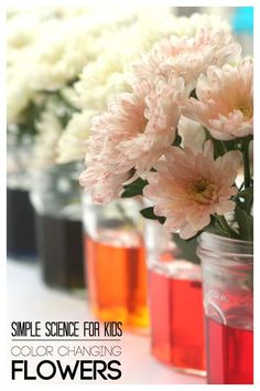 Simple Science for Kids Color Changing Flowers