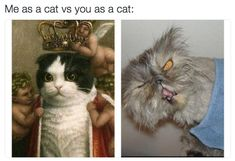 "When you evaluate the competition: | 27 Pictures That Will Make You Say ""Me As A Cat"""