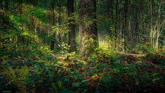 Las, Zieleń, Światło, Drzewa Country Roads, Plants, Plant, Planets