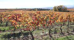 ¿Qué impacto tienen los fungicidas aplicados en viñedos en agua y suelos?