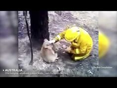 Faith In Humanity Restored Compilation Animals Edition - YouTube