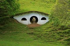 When Peter Jackson's production crew left Matamata, New Zealand, they left 17 hobbit holes on the private farm that was used as a stand-in for the Shire. Since then, the farm's sheep have moved in on this hobbit ghost town. Sheep Shelter, Animal Shelter, Hobbit Hole, The Hobbit, Hobbit Feet, Sheep House, Earth Sheltered Homes, Underground Homes, Underground Living