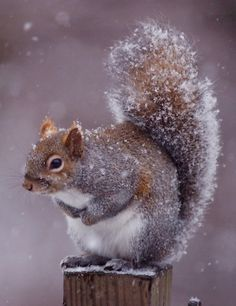 It shouldn't snow in Nov. before all the nuts are gathered...