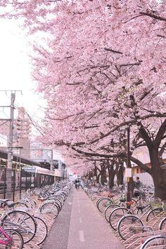 ピンクな駐輪場 by Hiro_ike http://photohito.com/photo/1123852/