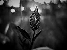 Resultado de imagen para fotografias de plantas en blanco y negro
