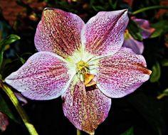 Ha eddig nem ismerted a hunyort, ezután imádni fogod Plants, Plant, Planets