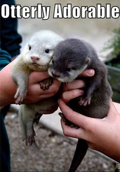 for Erika, my otter half  I'm the dark one, you're the light one!