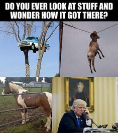 funny memes ever look at stuff and wonder how it got there Donald trump Funny Shit, The Funny, Funny Memes, Funny Stuff, Cosplay Anime, Twisted Humor, Just For Laughs, Best Memes, Funniest Quotes
