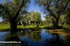 În antichitate, pe locul viitoarei cetăți Chilia, a existat o cetate grecească 🏛 Achillea. Numele acesteia a venit de la numele eroului grec Ahile, înmormântat, potrivit legendei, la gurile Dunării. La sfârșitul secolului al XIV-lea, Mircea cel Bătrân extinde teritoriul Țării Românești ⚔ până la Marea Neagră 🌊, Chilia intrând astfel în componența statului muntean. #viziteazadelta 😍 Chile, River, Outdoor, Greece, Outdoors, Chili, Outdoor Living, Garden, Rivers