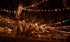 The Banyan Tree * Lahaina  * Hawaii  Something that you cannot miss, so awesome
