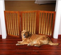 WELLAND Wood Free Standing Folding Pet Gate Light Cherry Finish ** More info could be found at the image url. (This is an affiliate link) Silicone Kitchen Utensils, Wooden Wall Shelves, Wine Rack Wall, Pet Gate, Cherry Finish, Wooden Flooring, Home Accents, Free, Design