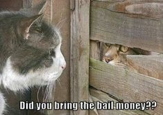 Funny Animal Pictures with Captions | cute captions 9 Daily Awww: Animals + captions = Awws and lols (28 ...