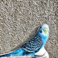 budgie decor