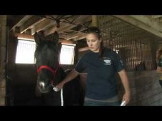 Safe Stalls: Giving Horses A Second Chance