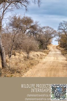 You're on an open safari vehicle in the African bush. It's quiet... but where is that elephant you came to Africa for? I mean, a herd of elephant would be hard to miss, right? Then, as the vehicle turns around the corner, there they are... four elephants... silence... a branch breaks... three more between the shrubs... and another two... They're everywhere! And there you are, surrounded by these majestic giants. That's the magic of Africa, and the memories last a lifetime! #volunteer…