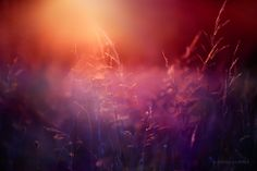 The morning light spoke … go forth and vibrantly set your world ablaze.