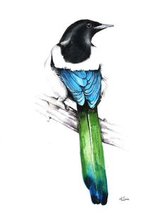 ARTFINDER: magpie wildlife watercolour painting by Karolina Kijak -  Original watercolors of magpie  Paper 300g  100% cotton, high quality pigments size 32,5x25,5cm  Follow me on facebook: https://www.facebook.com/kijakw...