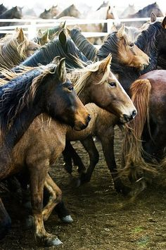 They may not be, but they look like wild horses. :)