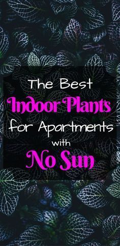 Low Light Indoor Plants | No Sun Houseplants |