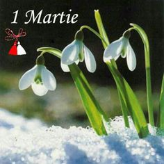Spring Time, Winter Wonderland, Bouquet, Christmas Ornaments, Holiday Decor, Flowers, Plants, 8 Martie, Pictures