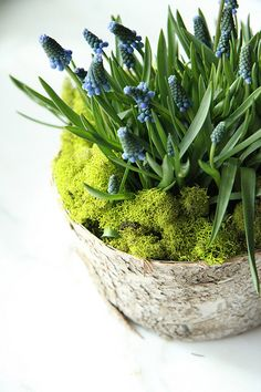 lovely spring centerpieces...
