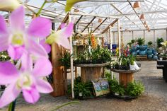 All types of orchids; tropical, scented, compact, unique, and classic. Types Of Orchids, Blue Orchids, Herb Garden, Vegetable Garden, Home And Garden, Orchid House, Orchid Care, Garden Spaces, Indoor Plants