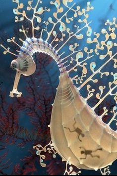 Sea Dragon with Full Tummy