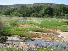 The tranquility of the wildflowers, the hills, and the water...Stop and take it all in!