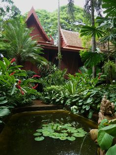 Backyards RealPalmTrees.com by Jim Thompson garden, Thailand | Dwarf date palm, ginger (Alpinia purpurata), water lily, peace lily, Variegated crinum, Palms (including Licuala sp.)