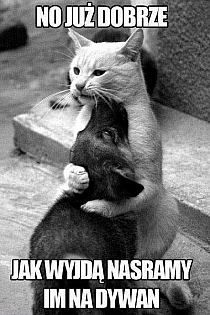 Como perros y Gatos, aqu fallo la equacion Like dogs and cats, equation fail Animals And Pets, Baby Animals, Funny Animals, Cute Animals, Funniest Animals, Animal Fun, Cute Kittens, Cats And Kittens, Funny Animal Pictures