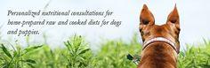 Monica Segal Nutritional Solutions for Dogs monicasegal.com