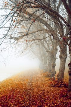 foggy autumn morning  http://decordots.com/2012/09/24/autumn-inspiration/#