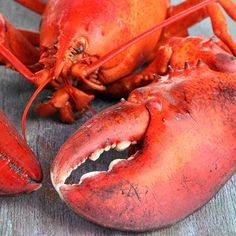 How To Boil Jumbo Lobsters Boiled Lobster Recipes, Learn To Cook, Food To Make, Red Lobster Restaurant, How To Cook Liver, Live Lobster, Grilled Lobster, Farmers Almanac, Island Food