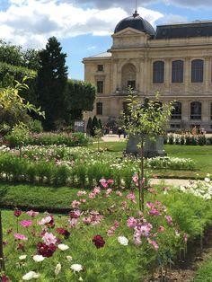 2016, l'année des cosmos au Jardin des Plantes de Paris (Paris, France) http://www.pariscotejardin.fr/2016/07/2016-l-annee-des-cosmos-au-jardin-des-plantes-de-paris/