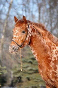 unique, horse, hest, trees, wood, forrest, cute, nuttet, beautiful, gorgeous, different, animal, photo.