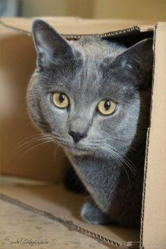 Griffon on www.yummypets.com Cat, kitten, kitty, meow, purr, pets, animals, pussycat, Yummypets