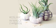 Get Crazy With Air Plants and Sea Urchins. Sounds weird but looks super cool, right? Who would have known that combining sea urchin shells with air plants would be so beautiful. Although I& a fan of Air Plants, Garden Plants, Indoor Plants, House Plants, Small Plants, Indoor Outdoor, Cactus Plante, Deco Floral, Cactus Y Suculentas