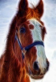 solo horse fractal