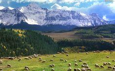 Taki wypas na: http://puszystaowca.pl/ekologiczny-wypas-owiec/
