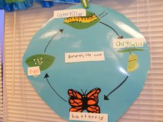 "Butterfly Anchor Chart--Use with the book, ""I'm a Caterpillar"""