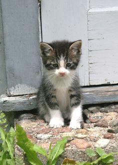 :) Kitten - so cute!