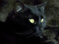 черный кот - Поиск в Google